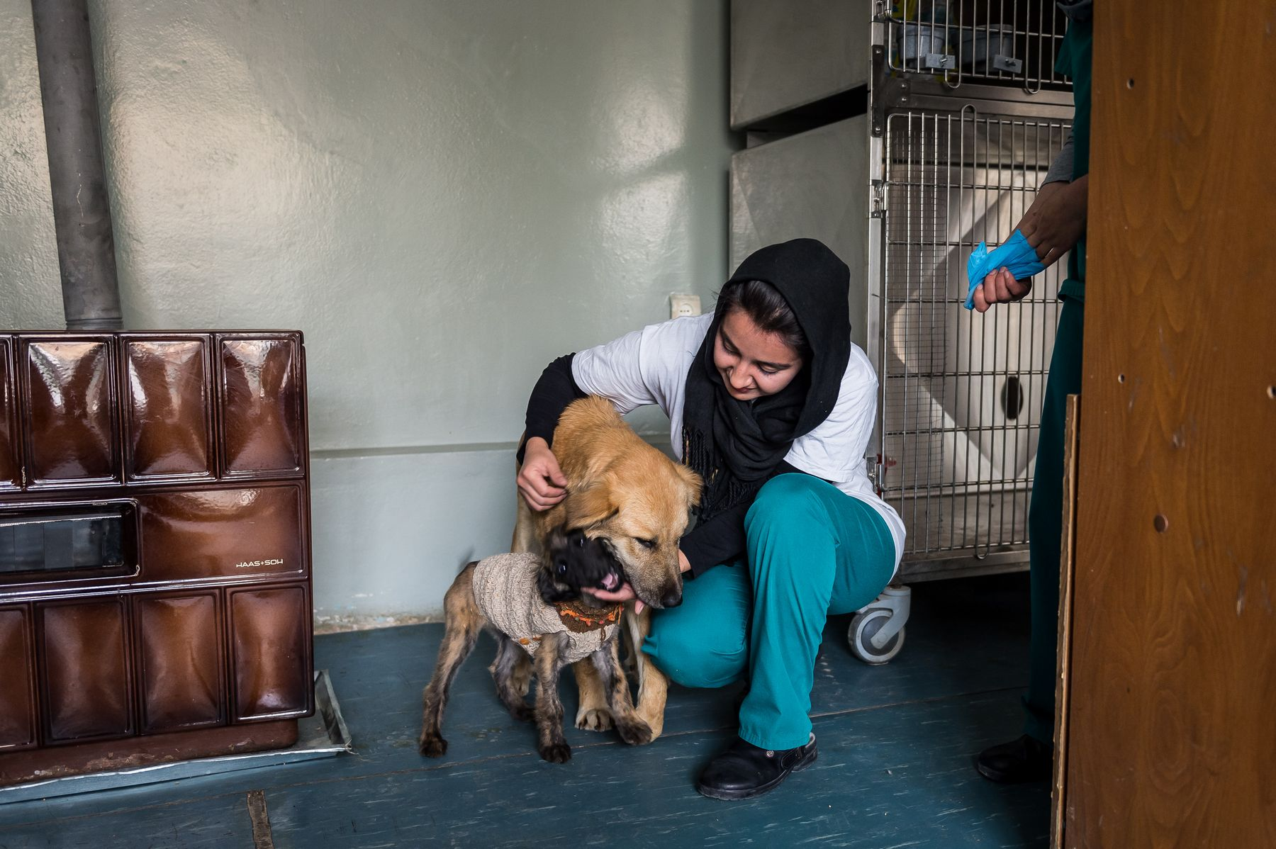 31 October 2015 - Kabul, Afghanistan. Nowzad vetinary clinic. Dr. Mariam (27) studied vet at Kabul University. The name of clinic means new born. It opened in 2013 and it is the only vet clinic in Afgahnistan.