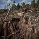 Il disastro ambientale in Sud America