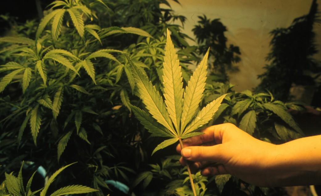 La capitale europea della cannabis