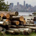 Trump dichiara guerra al legname canadese