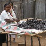 La guerra della vaniglia <br> amareggia il Madagascar