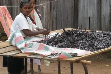 Vaniglia Madagascar (ilGiornale)