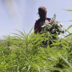 Il villaggio della cannabis