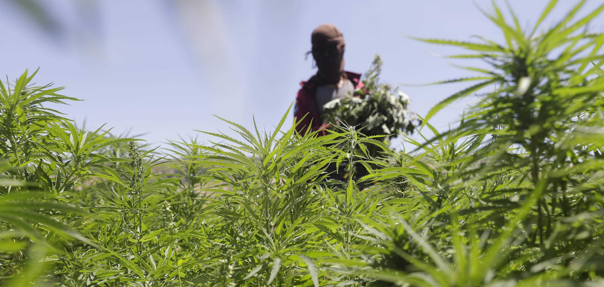 Yammouneh, il villaggio della cannabis in Libano (LaPresse)