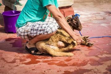 Festa del sacrificio in Marocco (Luciana Coluccello)