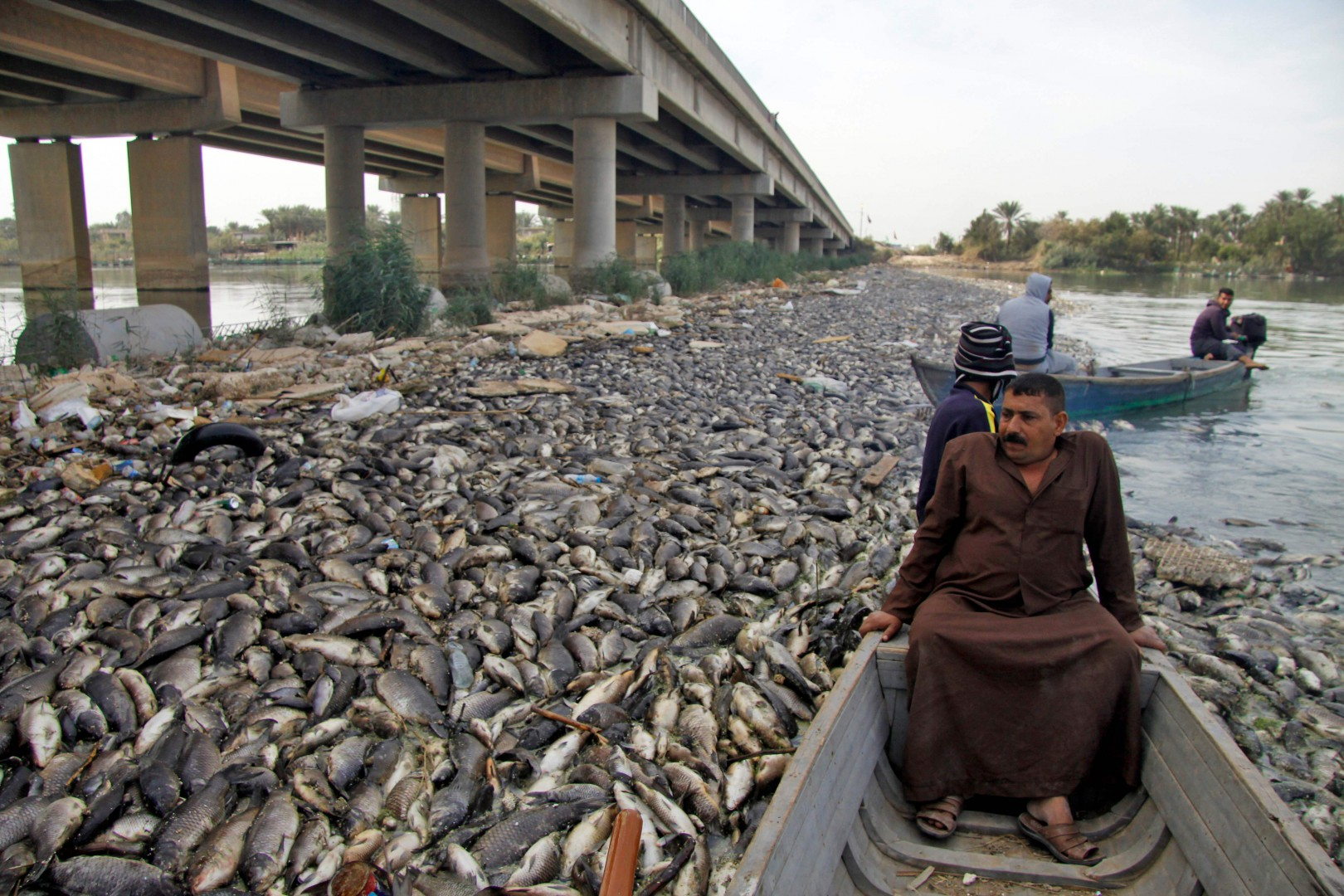 Iraqi men sail past scores of dead fish, from nearby farms, floating on the Euphrates river near the town of Sadat al Hindiya, north of the central Iraqi city of Hilla, on November 2, 2018. - Iraqi fishermen, south of Baghdad were stunned and angry after finding thousands of dead carp mysteriously floating in their water farms or washed up on the Euphrates' river bed. (Photo by Haidar HAMDANI / AFP)