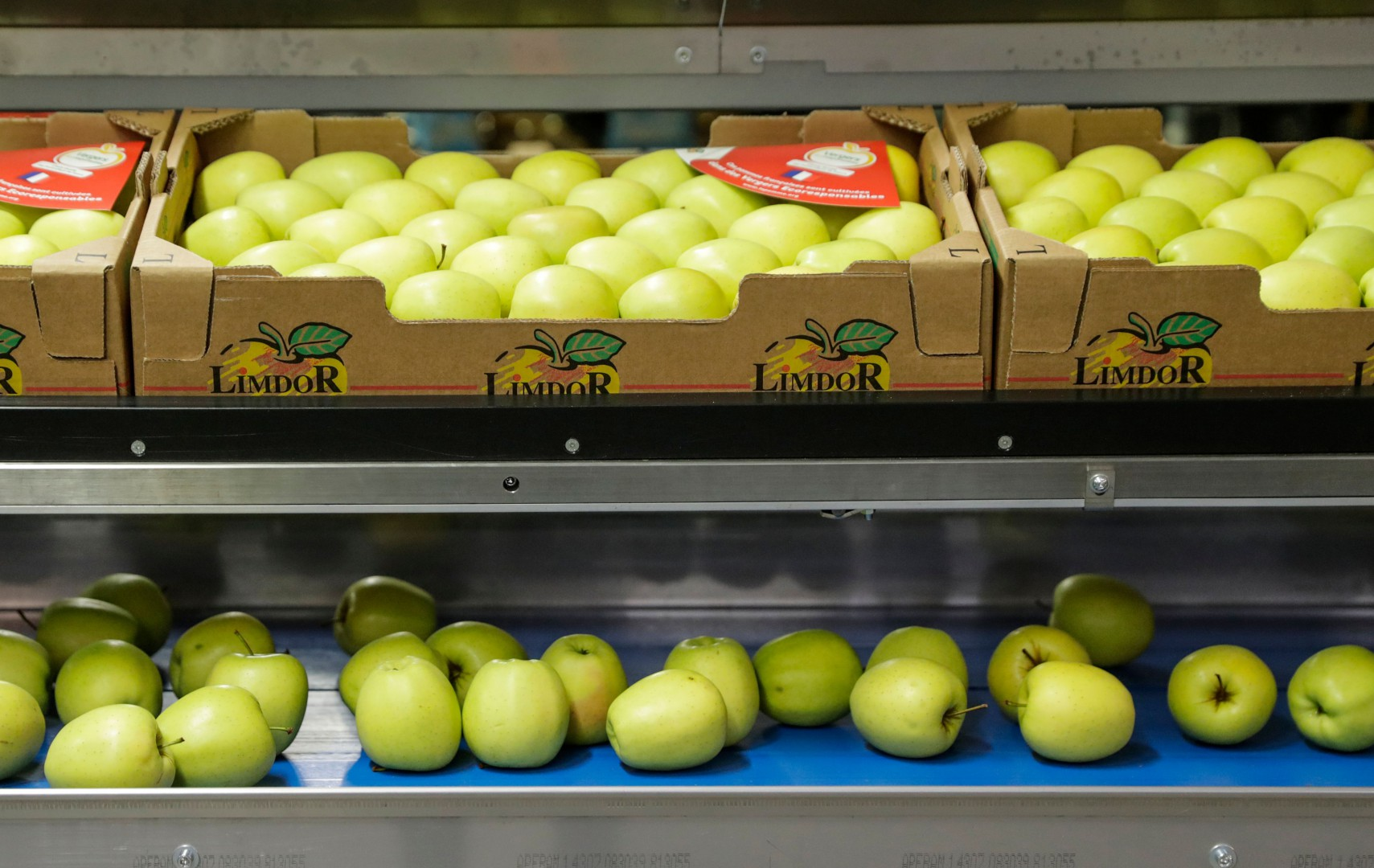 Bio certified apples are pictured in the Limdor fruit cooperative in Saint-Yrieix-la-Perche, central western France, on December 21, 2018. (Photo by Thomas SAMSON / AFP)