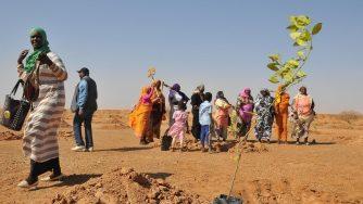 Green great wall deserto del Sahel