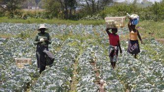 Agricoltura in Mozambico (LaPresse)