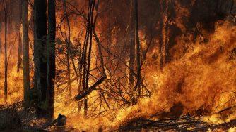 Incendi in Australia La Presse)