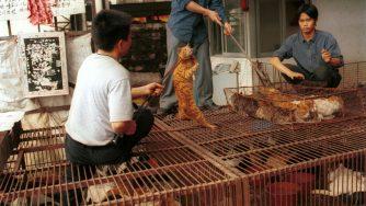 Mercato cinese di carne di cane e gatto (LaPresse)