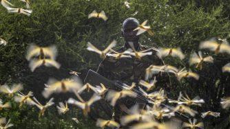 Locuste in Africa orientale