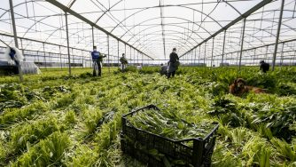 Italia agricoltura (La Presse)