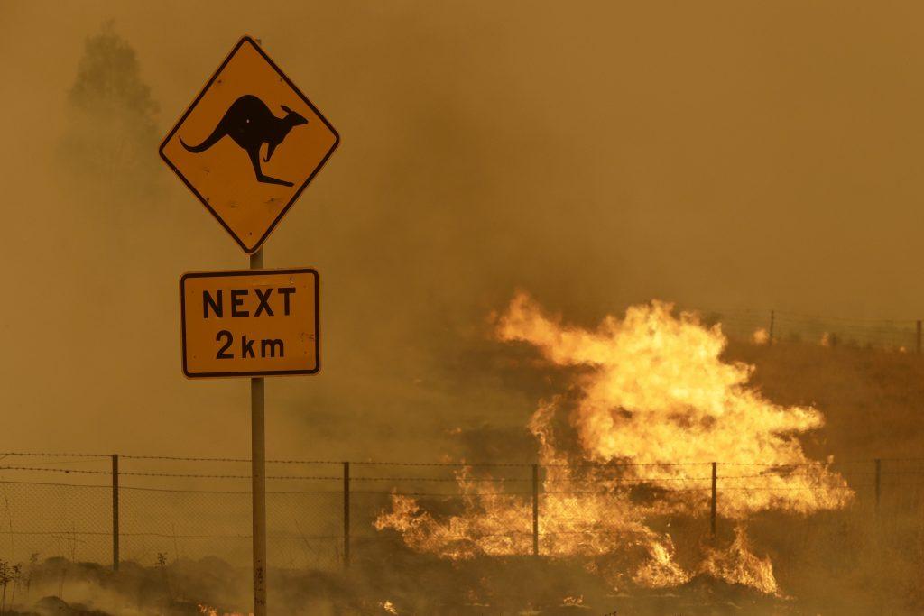 Tra il 2019 e il 2020 una serie di incendi ha devastato l'Amazzonia, l'Australia e diverse altre aree del globo. E c'è pure chi ha contribuito ad alimentare le fiamme, come è successo a Chernobyl