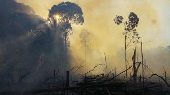 Brasile, emergenza incendi in Amazzonia