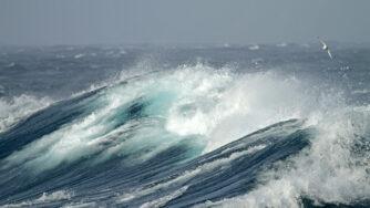 salute oceani