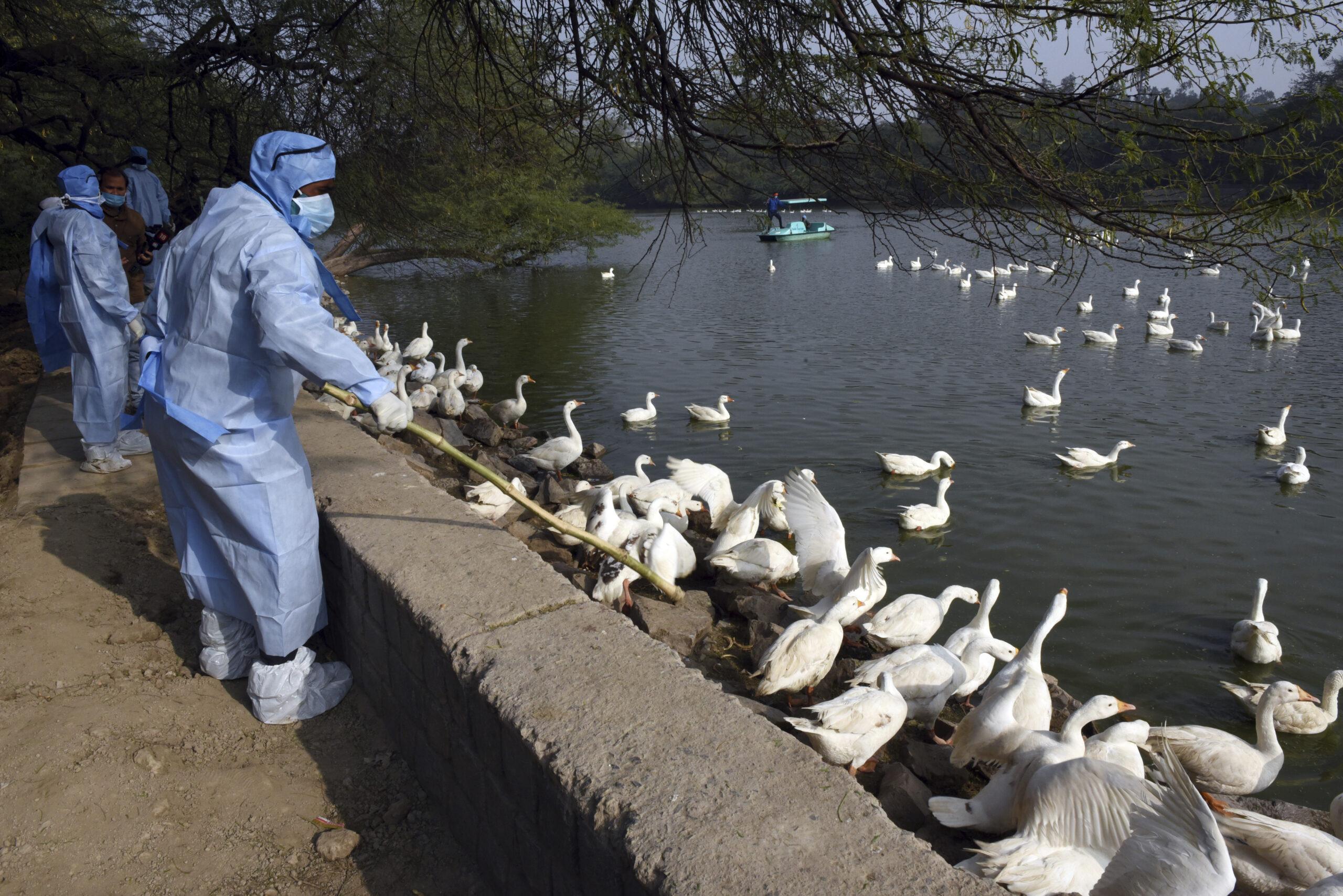 Influenza aviaria in Cina, escalation di casi (umani). L